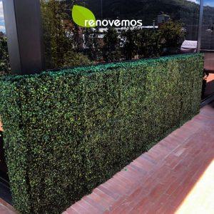 Proyectos-tapete-buxus
