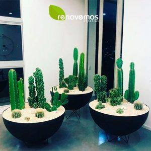 Bowls-y-plantas-naturales